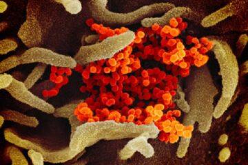 Vaccino Coronavirus: ecco quanto ci vorrà