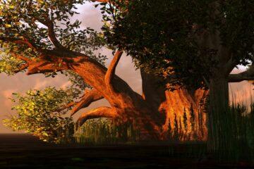 Caduta albero: ultime sentenze