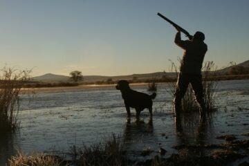 Cani da caccia: cosa prevede la legge