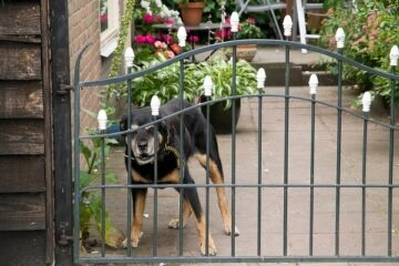 Cane aggredisce intruso: si può essere denunciati?