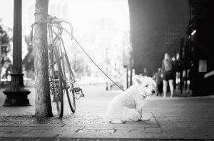È vietato tenere i cani alla catena?