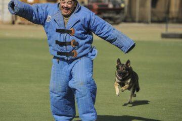 Legge cani da difesa: cosa prevede la legge