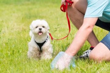 Legge sulla raccolta degli escrementi dei cani