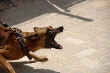 Morso da cane al guinzaglio