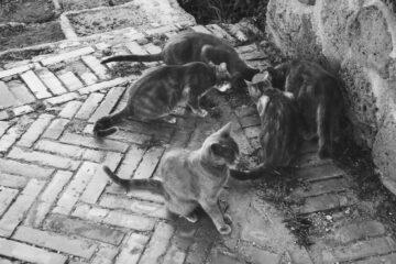 È vietato dare da mangiare ai gatti randagi?