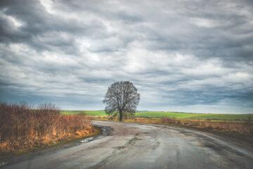 Ramo sulla strada: chi risarcisce i danni per l'incidente?