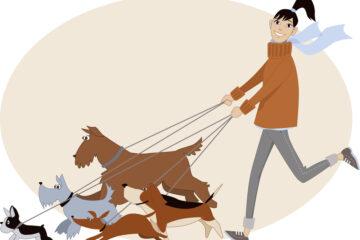Se il Dog Sitter smarrisce il cane deve risarcire?