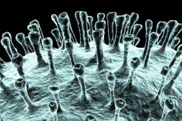 Coronavirus: possibile proroga dello stato di emergenza