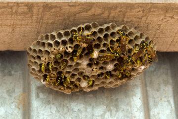 Nidi vespe nelle tapparelle: spese disinfestazione sono condominiali?