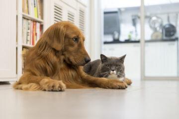 Cani e gatti in appartamento: legge