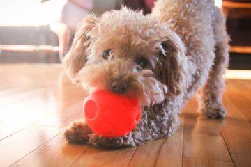 Covid: primo cane positivo in Italia