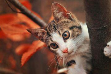Posso entrare nei cortili del vicinato per recuperare il mio gatto?