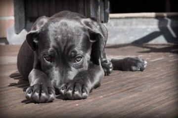 Maltrattamento animali: come dimostrare?