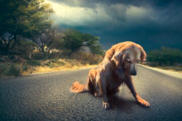 Risarcimento danni da cane randagio sulla strada