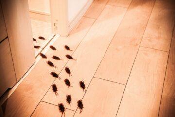 Disinfestazione condominio: chi paga?