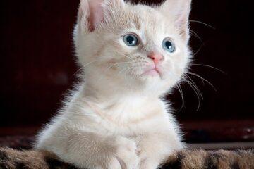 Il gatto può andare dal vicino?