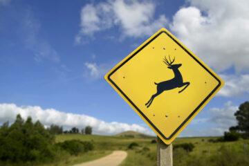 Danni cagionati da fauna selvatica: Cassazione