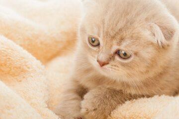 Covid: variante inglese scoperta in un gatto
