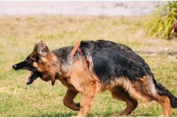 Tempi per denuncia morso cane