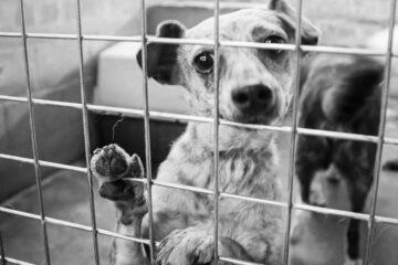 Cane in box senza aerazione: è reato
