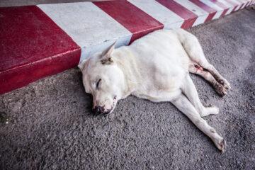 Cane provoca incidente stradale