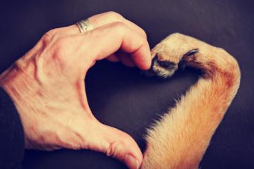 Affido animali dopo separazione e divorzio: ultime sentenze