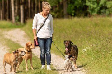 Quanto guadagna un dog sitter?
