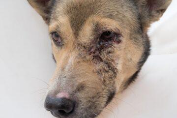Mancata cura del cane: cosa rischia il padrone?